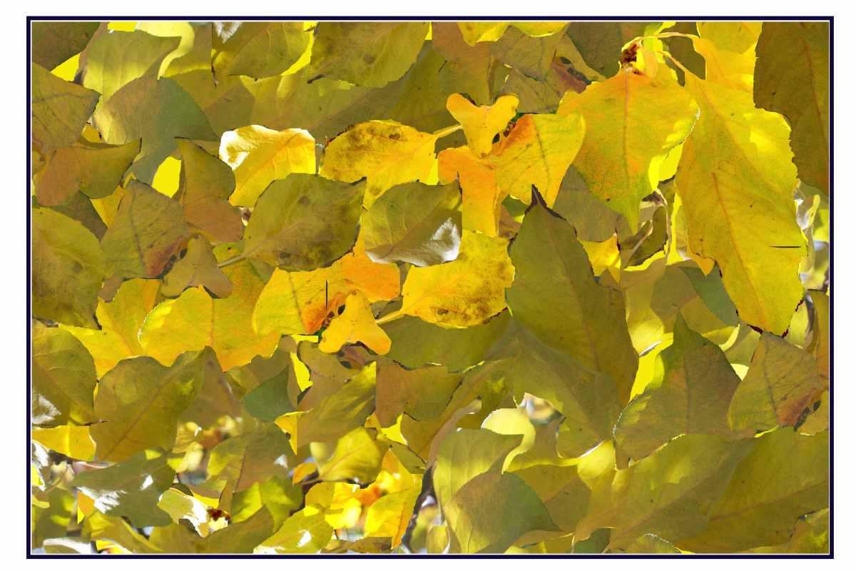 Sun dappled leaves