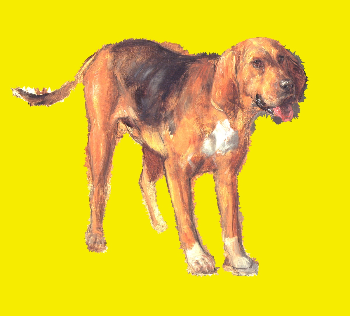 dog gone yellow